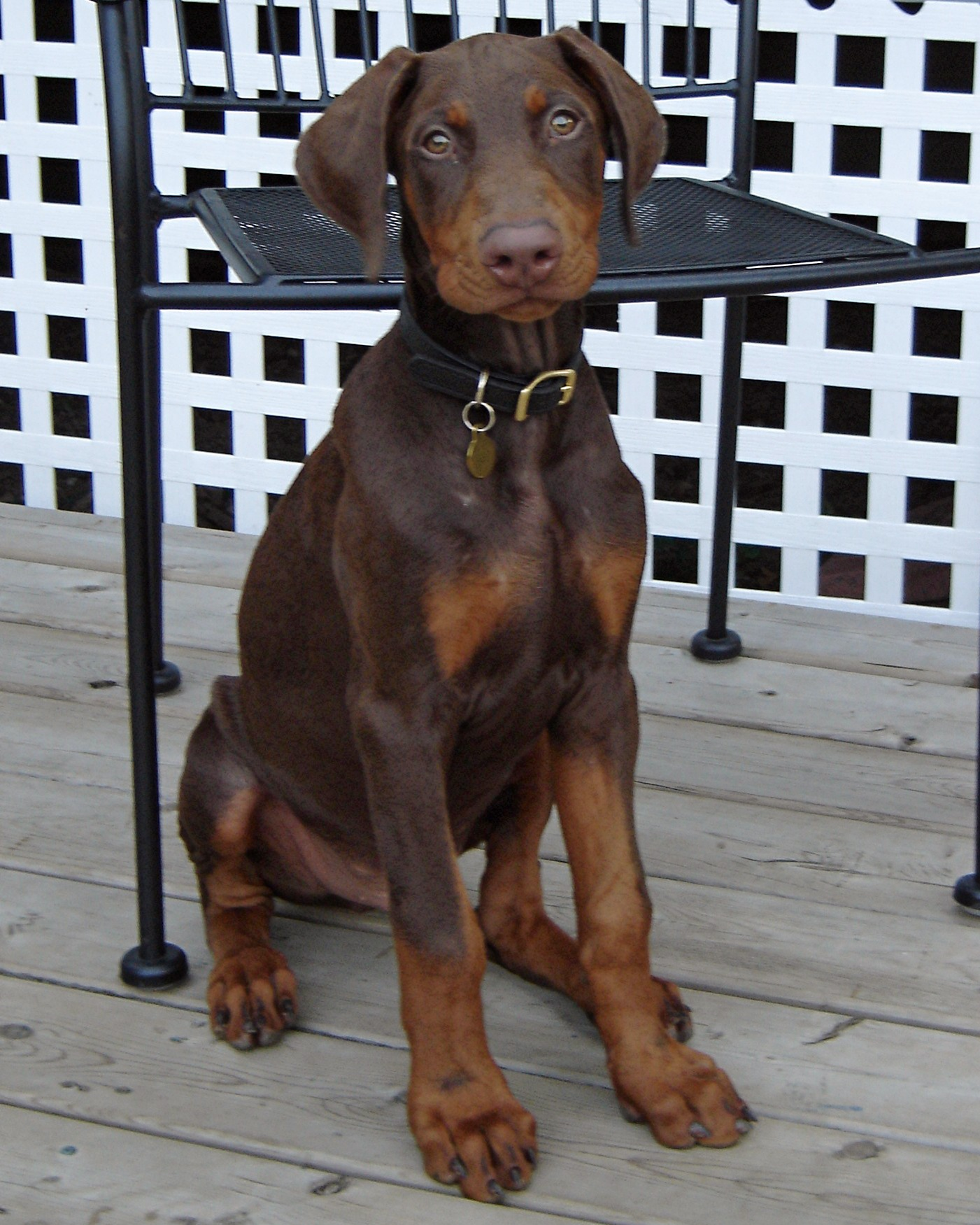Doberman Puppy Supplements