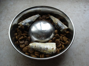canned sardines added to dry dog food for extra nutrition and supplement