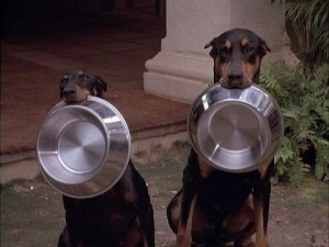 dpg food for dobermans tips