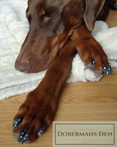 dog with nails painted