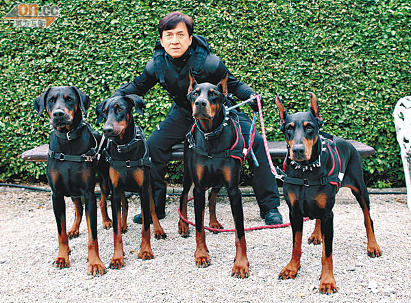 Jackie Chan with group of dobermans chase him in maze