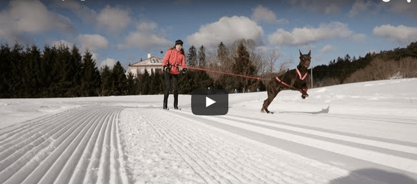 go pro videos with dobermans
