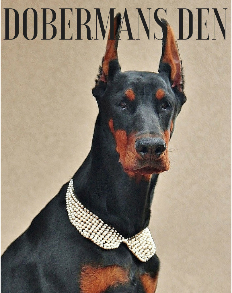 DOBERMAN BLOG WEBSITE