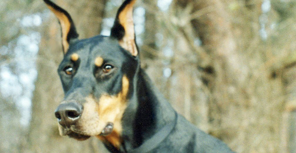 DOBERMAN INFORMATION