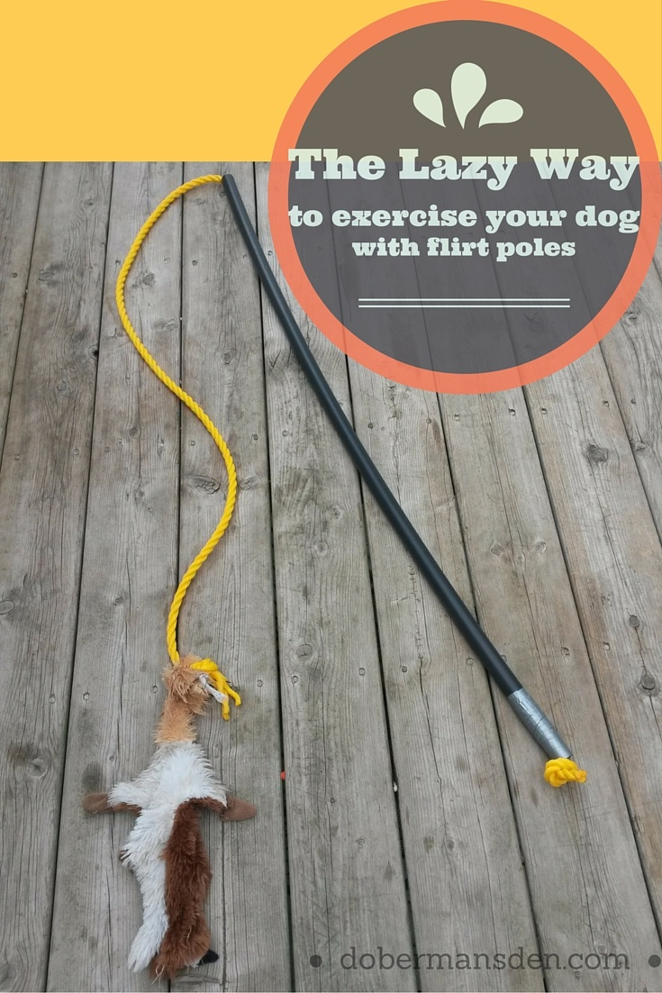 The Lazy Way To Exercise Your Dog