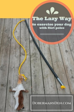 ways to exercise your dog with a flirt pole dog toy