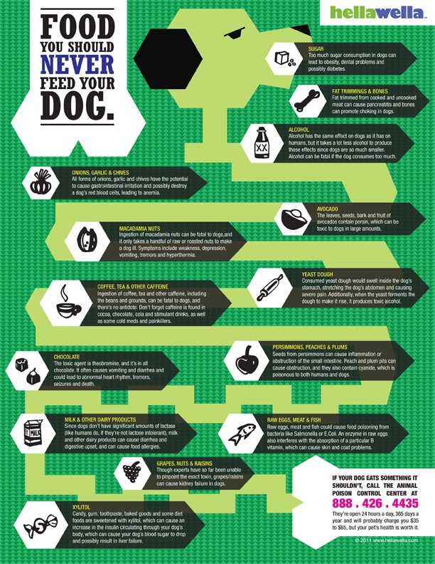 Memorize These Foods Dogs Should Avoid!