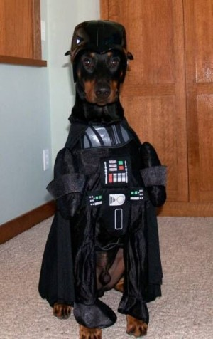 star wars dog doberman darth vader costume