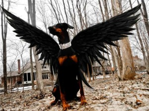 beautiful doberman dark angel costume