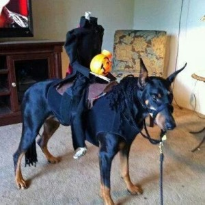 doberman headless horseman costume