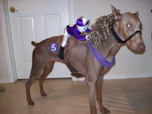 doberman horse with rider on his back costume