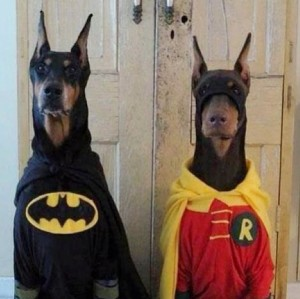 batman and robin doberman dog halloween costume