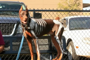 doberman skeleton costume