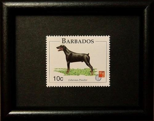 doberman stamp framed from Barbados