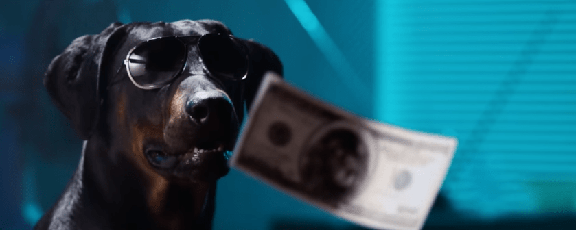 doberman dog wearing sunglasses with money looking cool