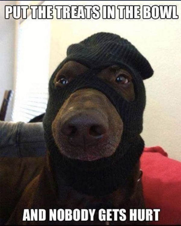 doberman wearing mask disguise