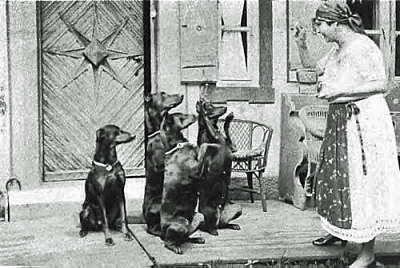 Village lady giving treats to four trained Dobermans.