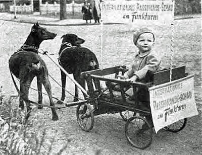 2 Dobermans push a cart with a baby