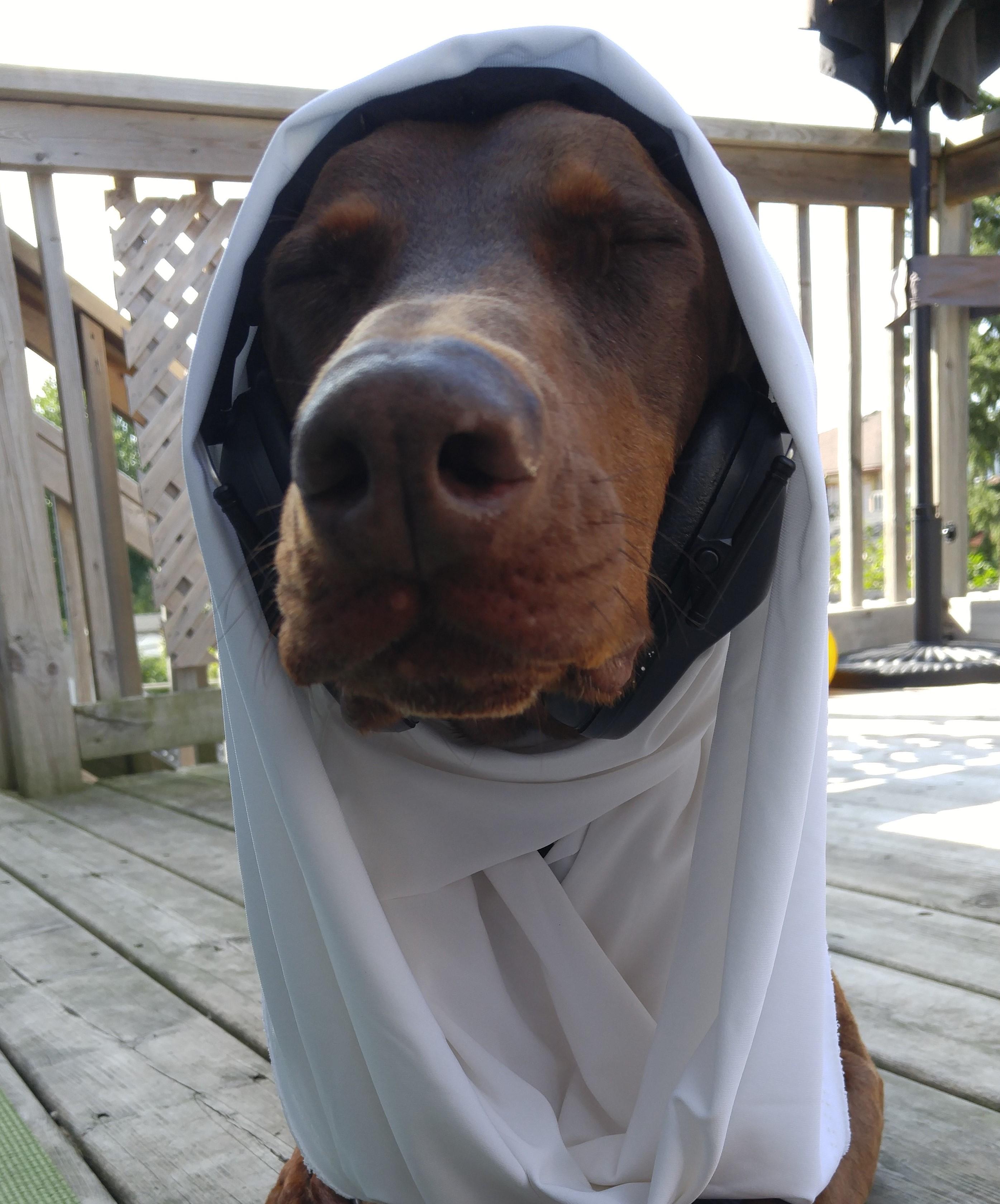 star wars costume dogs
