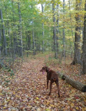 dog walking in forest in fall